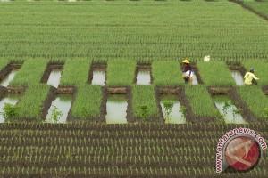 TKI Taiwan diajari tata cara bertani organik