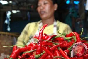Harga cabai merah menggila di Padang, sudah Rp80 ribu per kilo