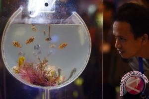 Sulut cari pasar baru ekspor ikan hias