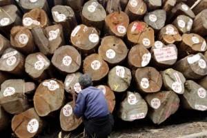 Myanmar hentikan produksi kayu jati