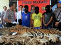 Perdagangan Kulit Harimau Sumatra