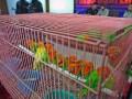 Penyelundupan Burung