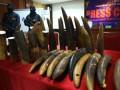 Penyelundupan Gading Gajah Afrika