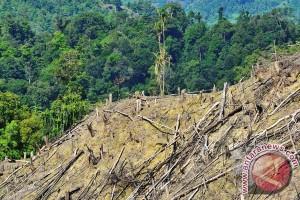48,8 juta penduduk Indonesia tinggal di hutan