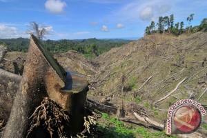 Satu juta dari 3,5 juta hektare hutan di Sumsel rusak