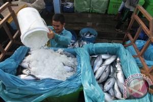 Hati ikan mampu deteksi polutan lingkungan
