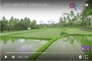 Bali Go Live, wisata digital ke Pulau Dewata