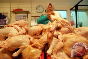 Pedagang ayam di Toboali keluhkan sepinya permintaan