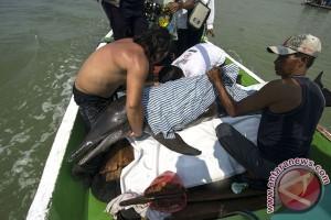 Lumba-lumba terdampar di Surabaya ditemukan tewas
