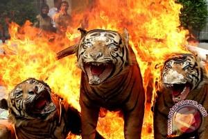 WWF imbau masyarakat peduli hewan dilindungi