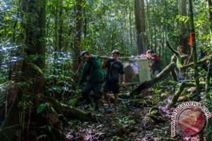 Norwegia-Indonesia perkuat kemitraan perlindungan hutan.