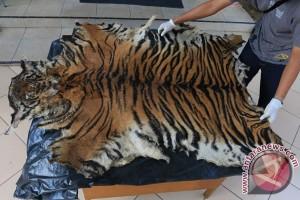 WWF apresiasi atas hukuman penjual kulit harimau