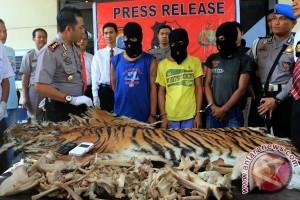Polda Jambi sita dua kulit harimau sumatera