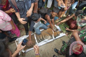 Warga harapkan harimau sumatera tetap di Mandeh