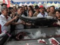 Pasar Ikan Murah