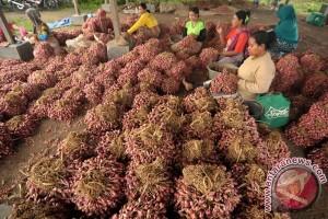 Pasokan bawang merah surplus jelang Lebaran