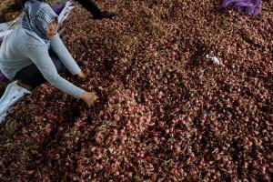 Bulog Sulteng turunkan harga jual bawang merah