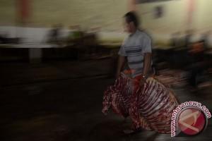 3.000 ekor sapi siap dipotong di RPH Makassar untuk Ramadhan, Lebaran
