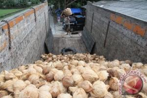50.700 hektare lahan kelapa di Jabar rusak