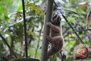 WWF: populasi margasatwa global bisa anjlok dua-pertiga pada 2020