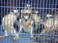 Perdagangan Satwa Langka Lampung