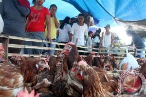 Permintaan Ayam Broiler Meningkat