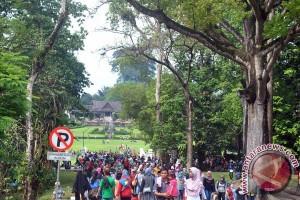 Bogor ingin buat perda khusus untuk lindungi pohon