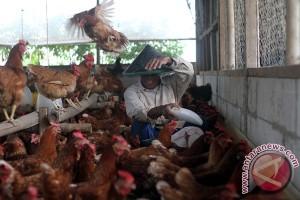 Bulog masuki industri pengolahan pakan ternak