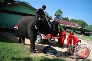Patroli Gajah Cegah Kebakaran Hutan