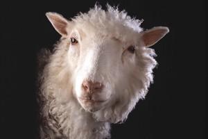 Hasil kloning domba Dolly bisa berumur panjang