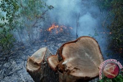 Polda Babel tegaskan pidana 15 tahun, denda Rp5 miliar bagi pembakar hutan