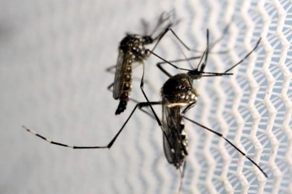Ilmuwan akan uji kemampuan Zika bunuh sel kanker