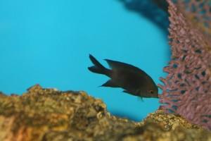 Siasat ikan menghadapi pemanasan global