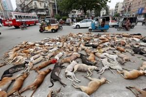 Pakistan matikan lebih dari 1.000 anjing liar