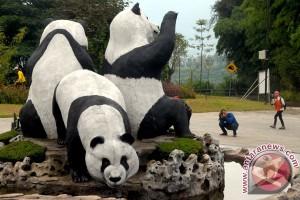 Giant Panda Akan Lengkapi Koleksi TSI