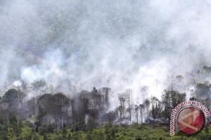 Kebakaran Hutan Dan Lahan Di Muba