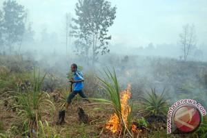 Waspadai potensi kebakaran hutan di Sumatera-Kalimantan, kata BMKG