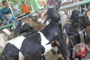 Pengurus masjid dilatih sembelih hewan kurban