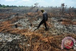 Pembakaran Lahan Rasau Jaya