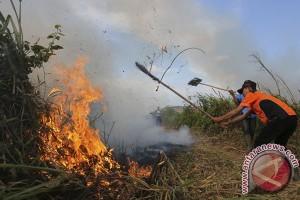 130 hektare hutan di Pasaman terbakar