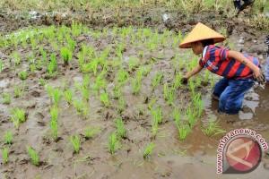 Menteri pertanian dorong perbatasan negara jadi lumbung padi
