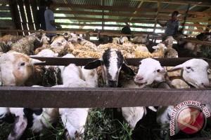 Distan Semarang terjunkan 56 petugas pantau hewan kurban