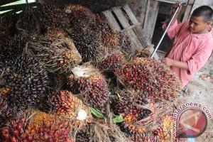 Harga TBS CPO Riau naik Rp16,08/kg