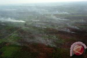 Pemerintah diminta umumkan dan bekukan perusahaan pembakar hutan