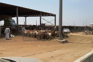 Jamaah dianjurkan bayar dam di Bank Alrajhi