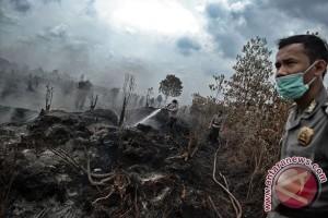 Adu teknologi Indonesia dan asing di lahan gambut