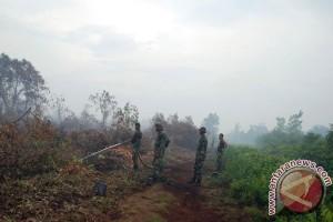 Darmin: Perusahaan sawit dukung pencegahan kebakaran hutan