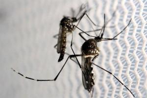 Nyamuk serang Victoria, Australia keluarkan peringatan kesehatan