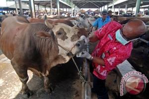 2.000 sapi divaksin cegah penyakit ngorok