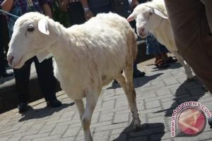 Berita menarik kemarin, perayaan Idul Adha hingga mitos daging kambing